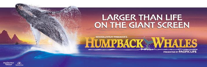 Humpback Whales 3D film poster