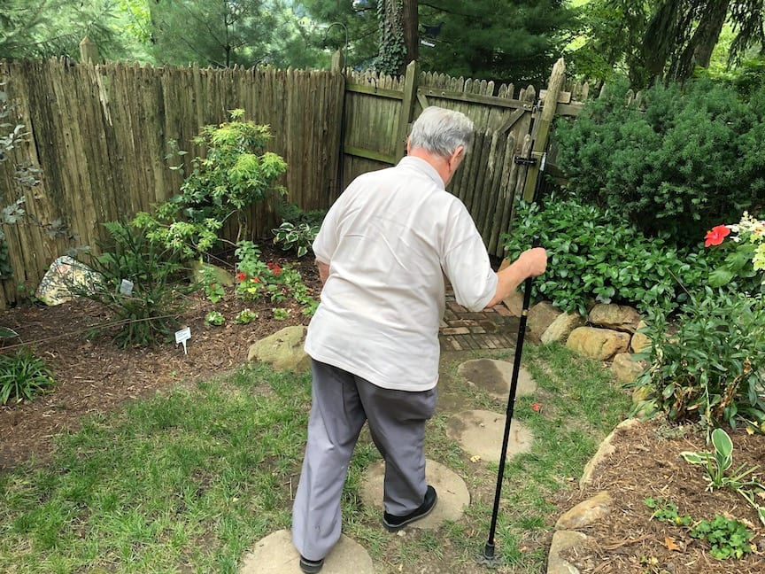 A elderly man walks with a cane through a garden.