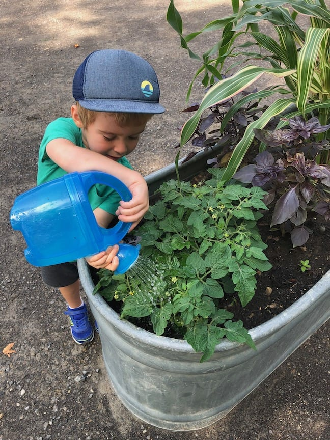 A little boy waters a plant with a blue watering can.