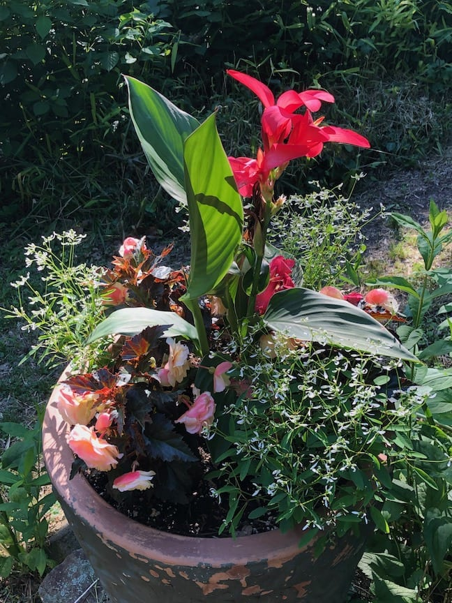 A red flower in a ceramic planter.