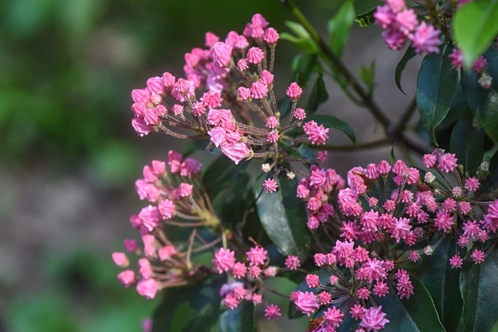 The Best Deer-Resistant Plants and Shrubs