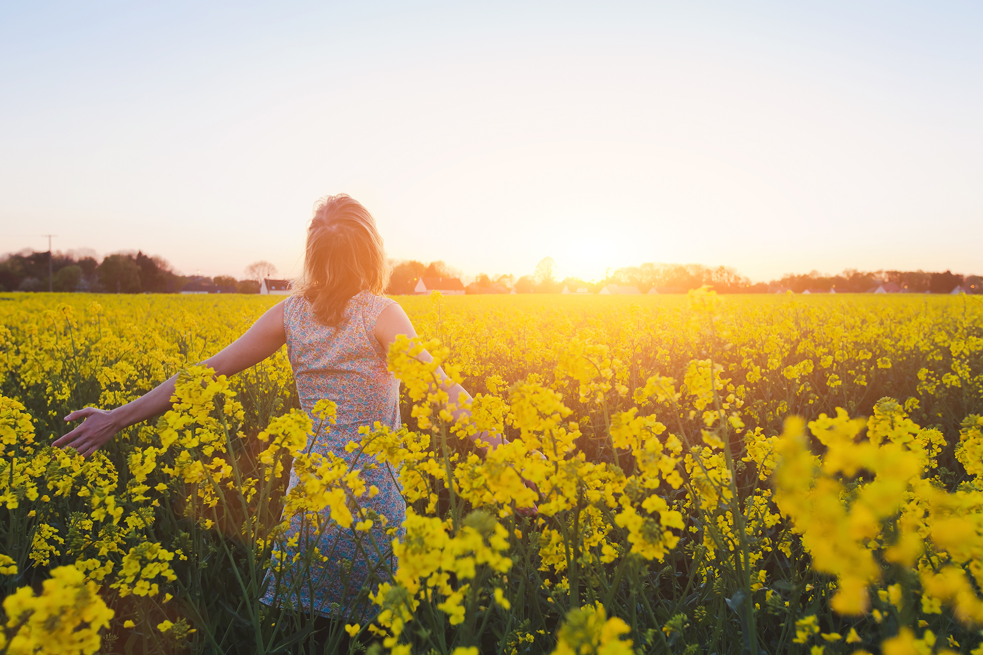 A young woman is walking through a large field full of tall yellow flowers at sunset.