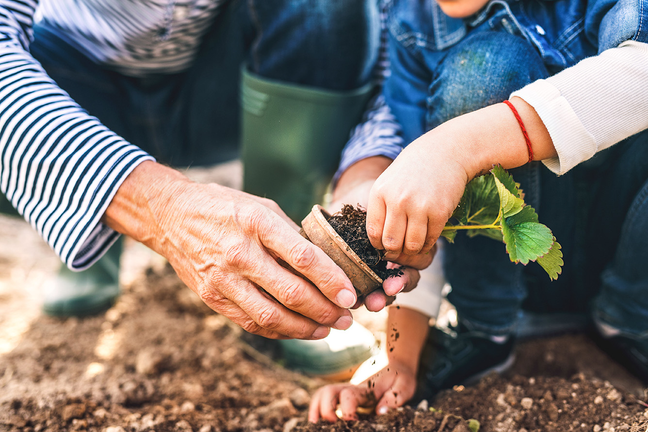 An older man helps his granddaughter plant a seedling in his garden.